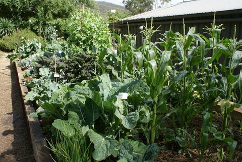 veg_garden_large.jpeg