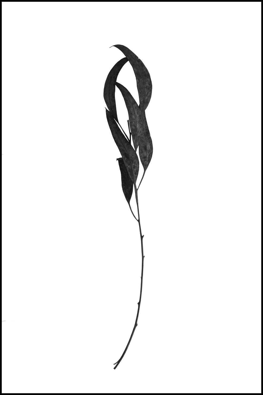 FOUND - a branch #3 (unwatermarked).jpg