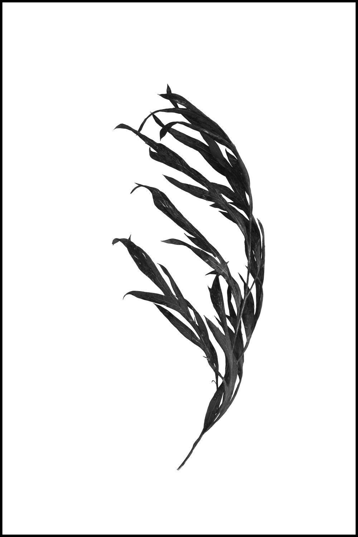 FOUND - a branch #4 (unwatermarked).jpg