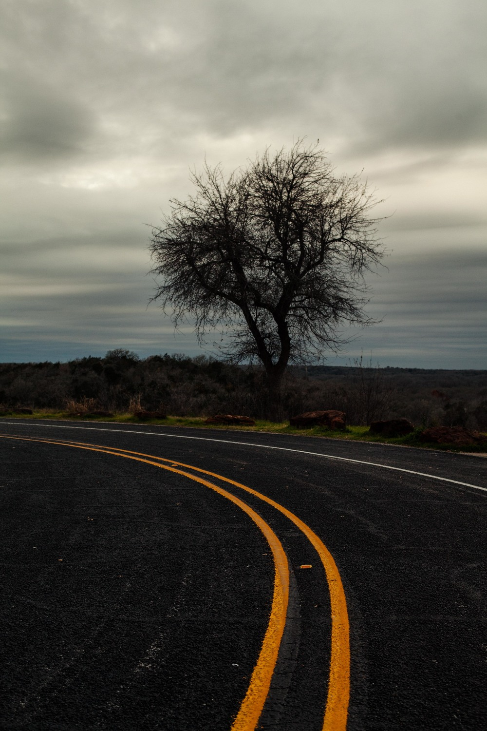 a tree on the side of a road.jpg