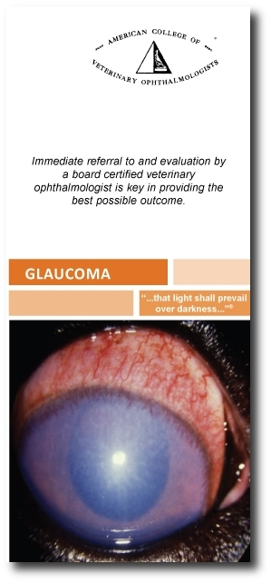 ACVO-Glaucoma-brochure with shadow.JPG