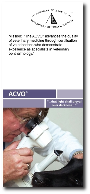 ACVO-brochure-screenshot with shadow.JPG