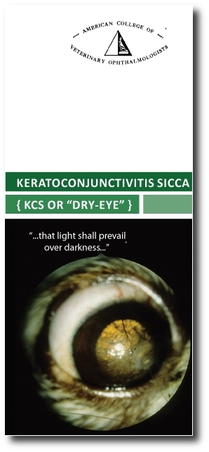 ACVO-KCS-brochure with shadow.JPG