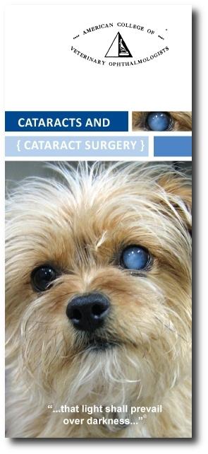 ACVO-Cataract-brochure with shadow.JPG