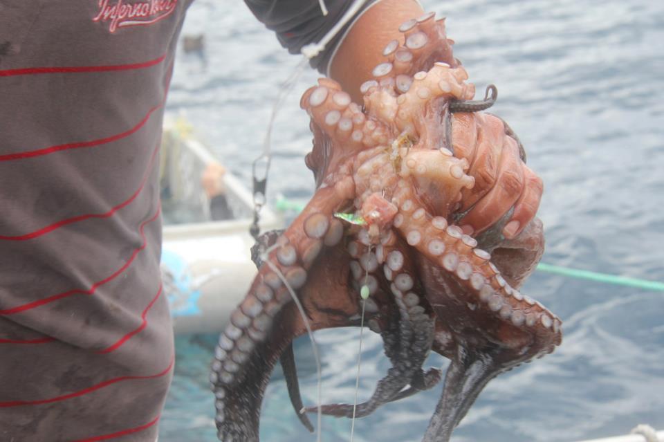octopus_NZ.jpeg