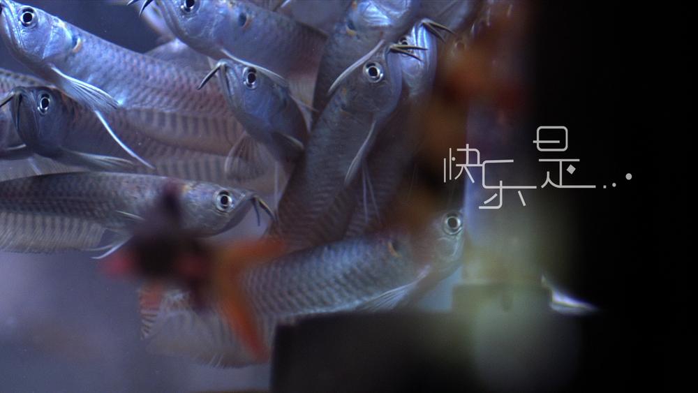 fish 20.jpg