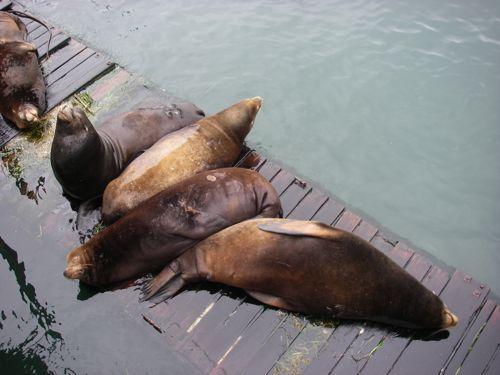 Sea Lions on the Docks