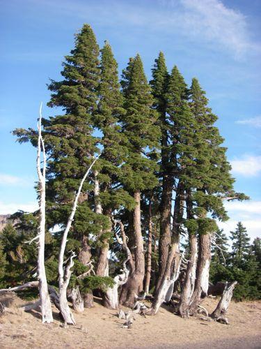 Trees along the ridge of the lake