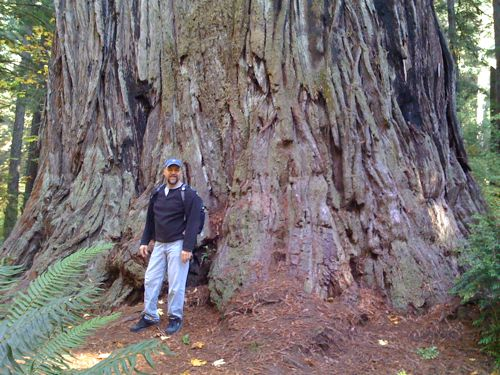 Redwoods are the largest living organisms on the planet