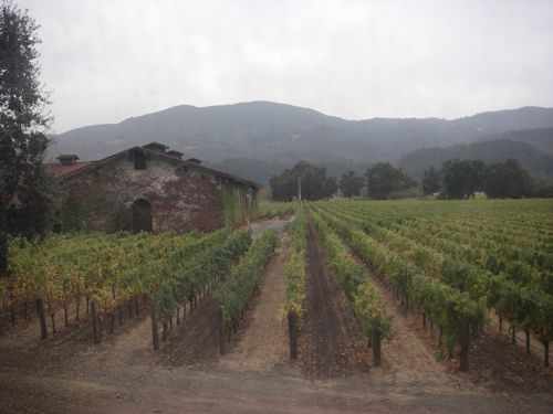 Vineyard along the route