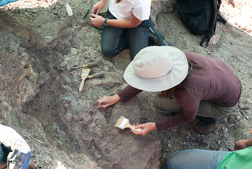 fossil-090603-L9991045