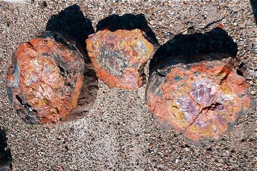 20090113-PetrifiedForNP-p-L1000243