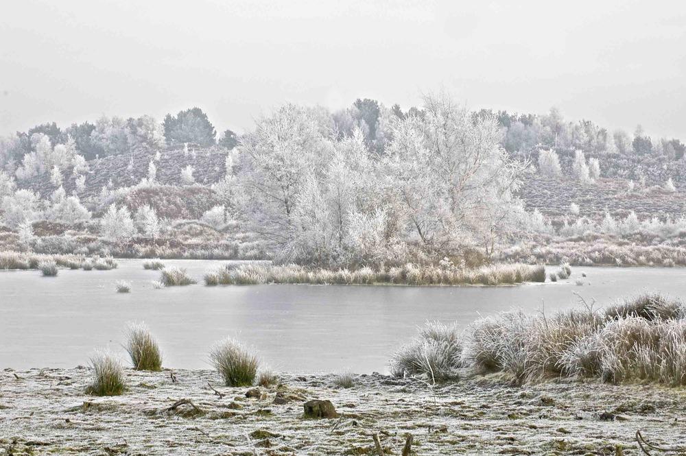 Woolmer Pond