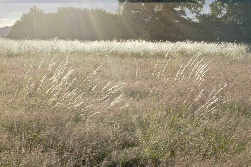 Sun on Grasses