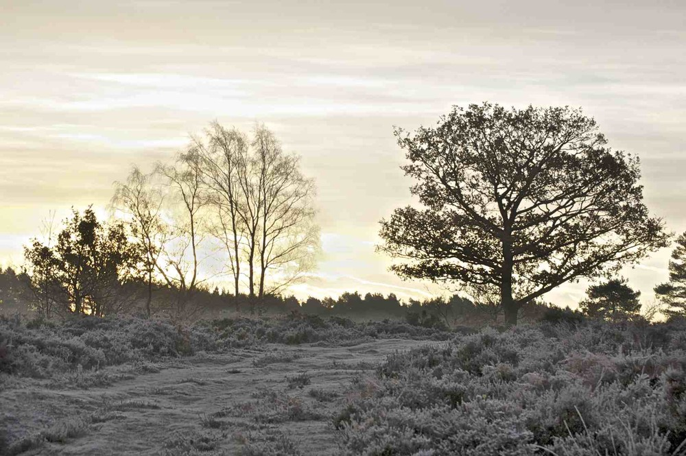 Sunrise on Longmoor Inclosure 1