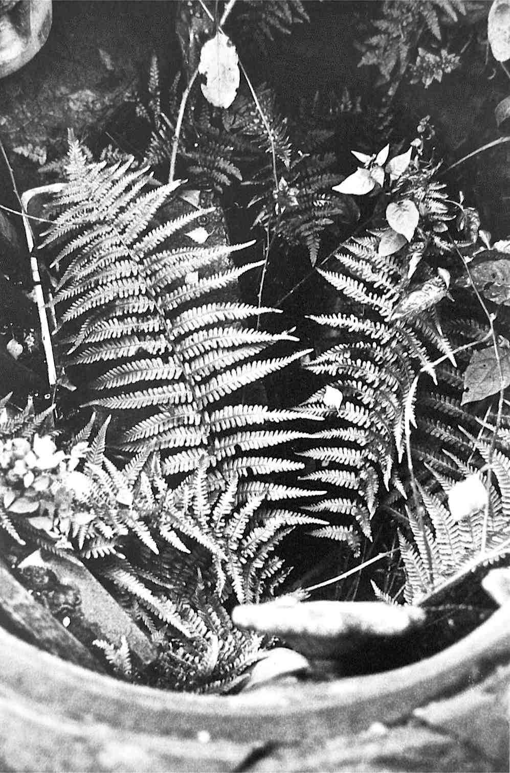 Fern Garden in Military Tank Access Hatch