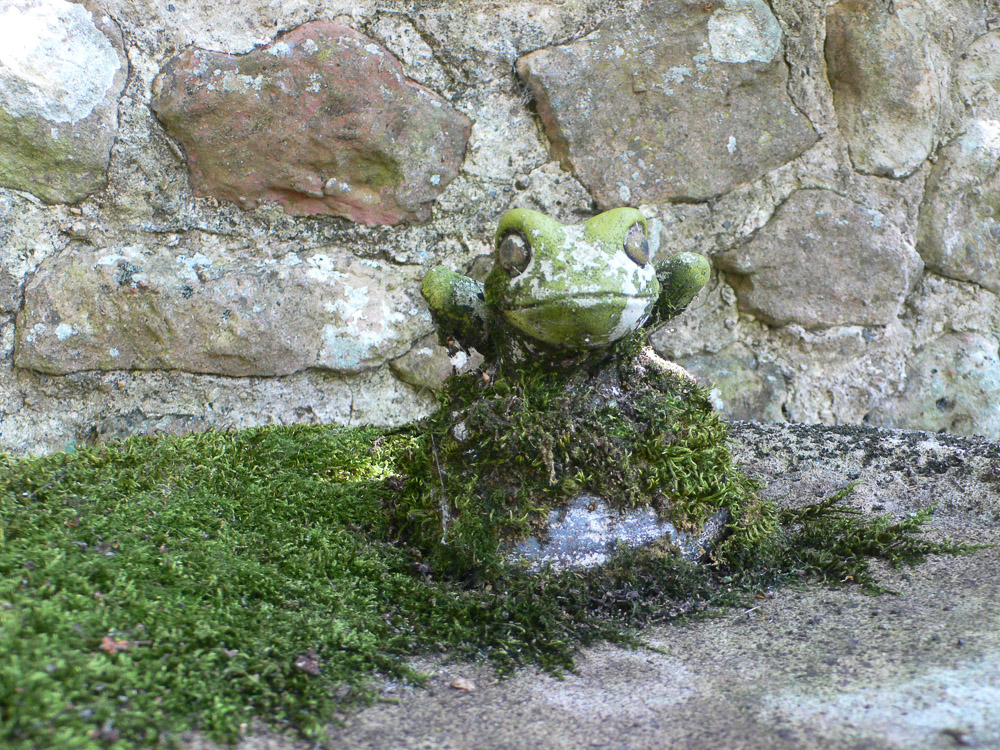 moss-and-frog