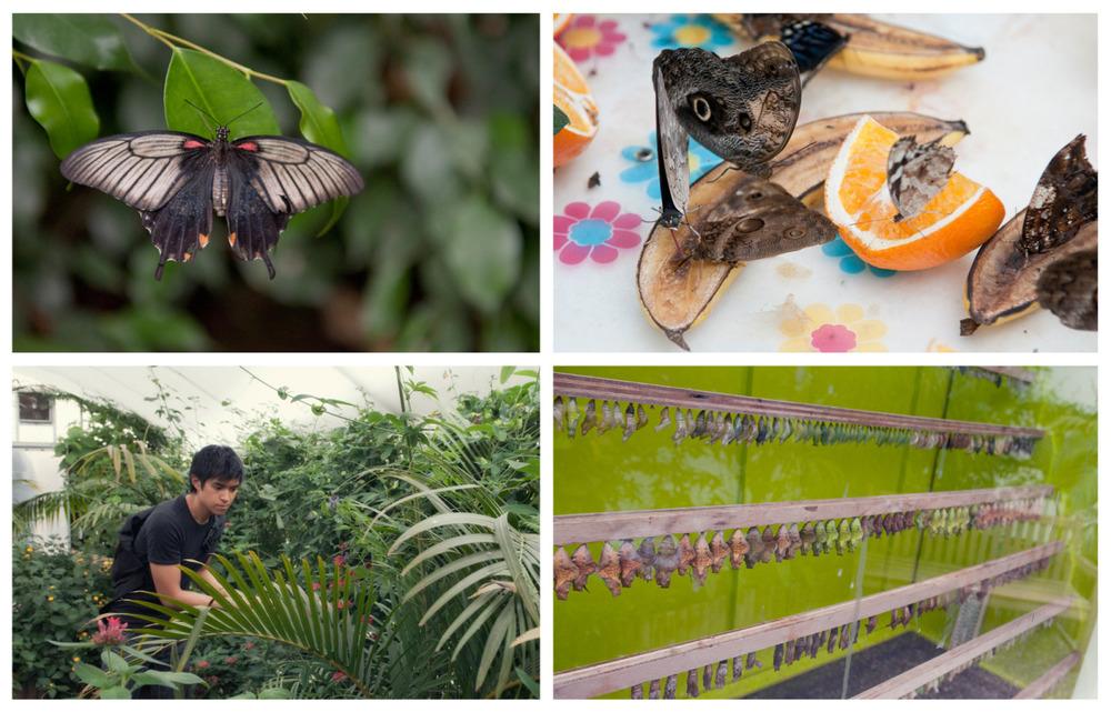 butterflies 2.jpg