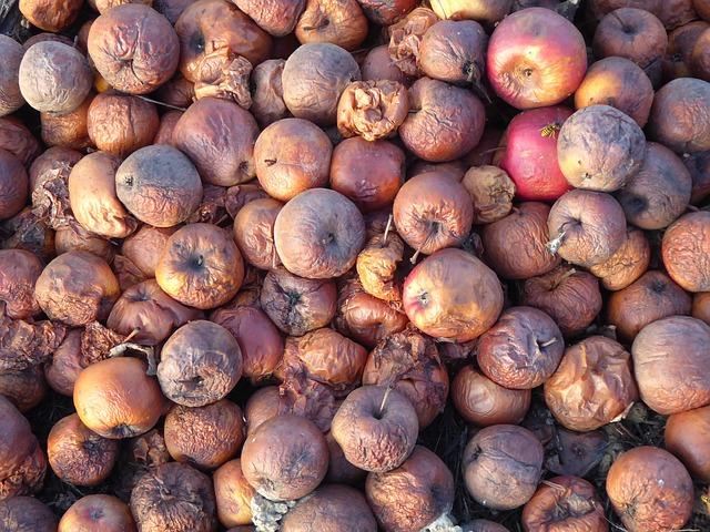 cider-apples-2908856_640.jpg