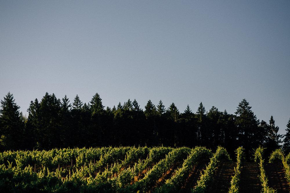Beacon hill winery wedding photographer Oregon destination066.JPG