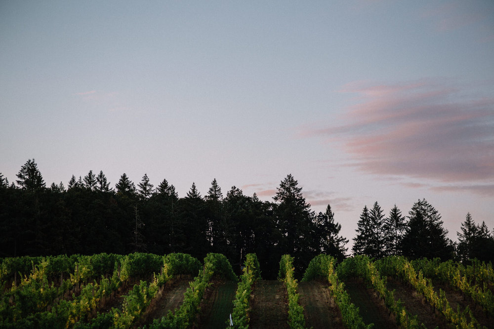 Beacon Hill Winery Wedding Willamette Valley Oregon 091.JPG