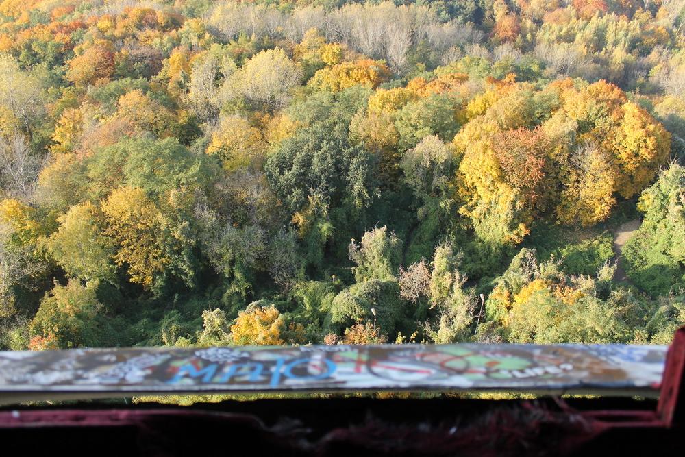 Manchmal sieht man den Wald vor lauter Bäumen nicht mehr