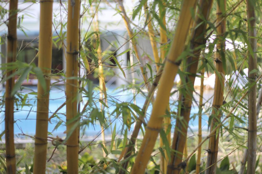anandaspa himalayas india ayurveda1618.jpg