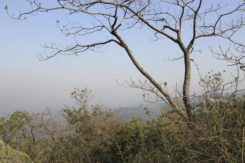 anandaspa himalayas india ayurveda1627.jpg