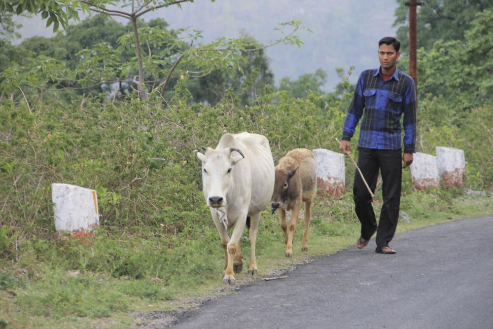 anandaspa himalayas india ayurveda1645.jpg
