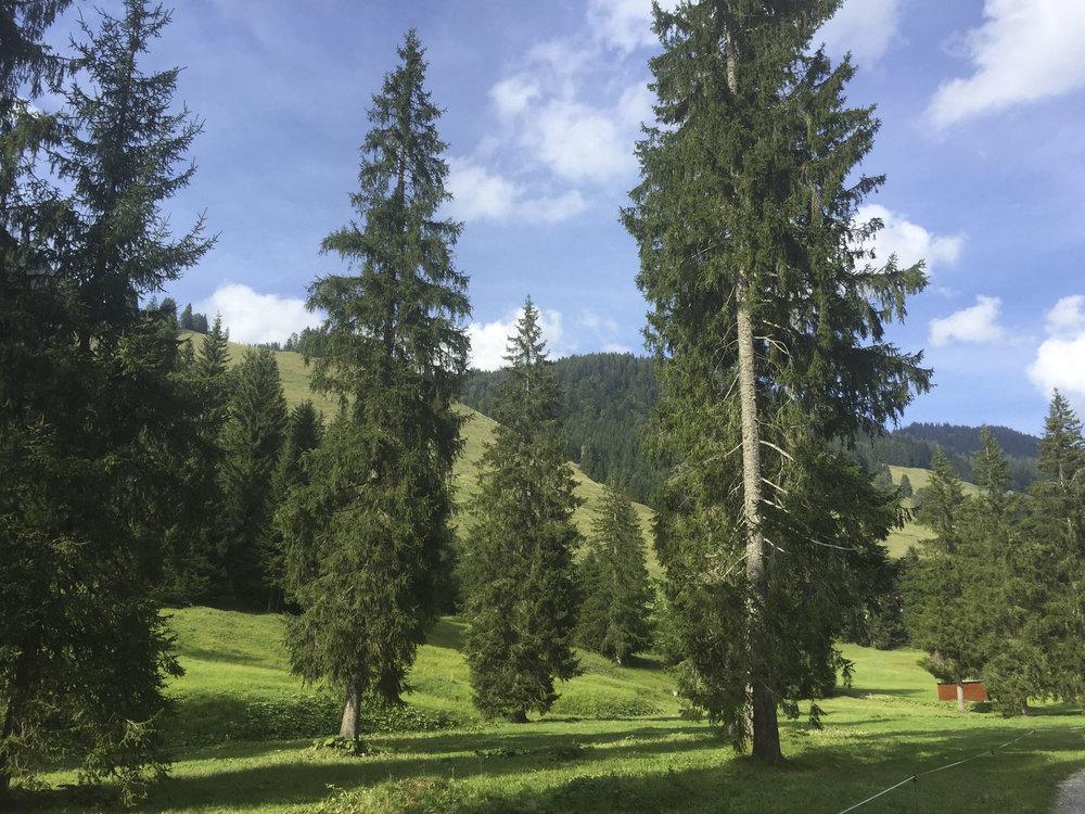 Hubertus Alpin Lodge & Spa4418.jpg