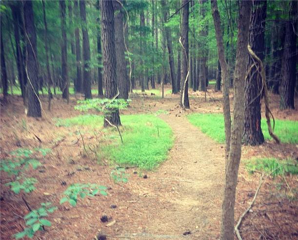 Carolina North Forest
