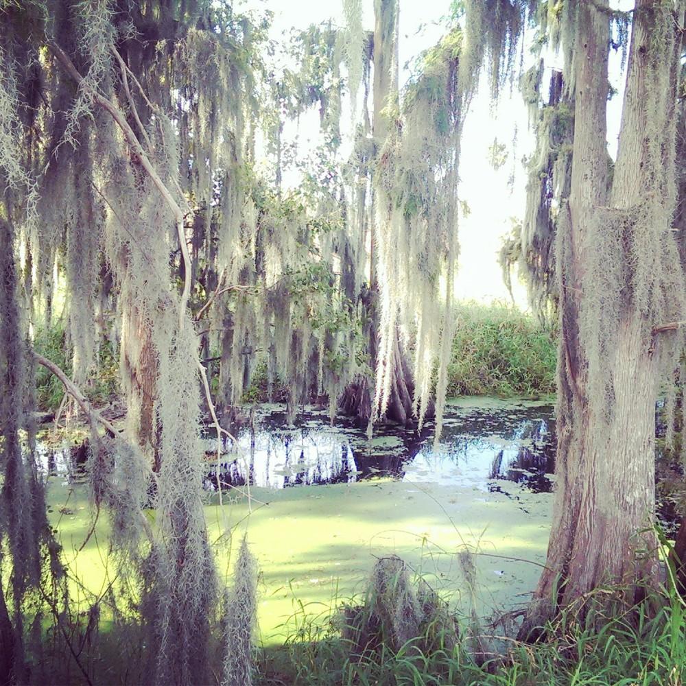 Swampland.