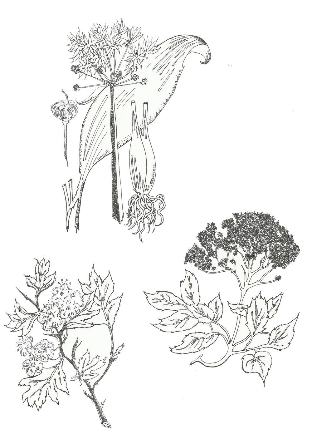 Flower Series - 2