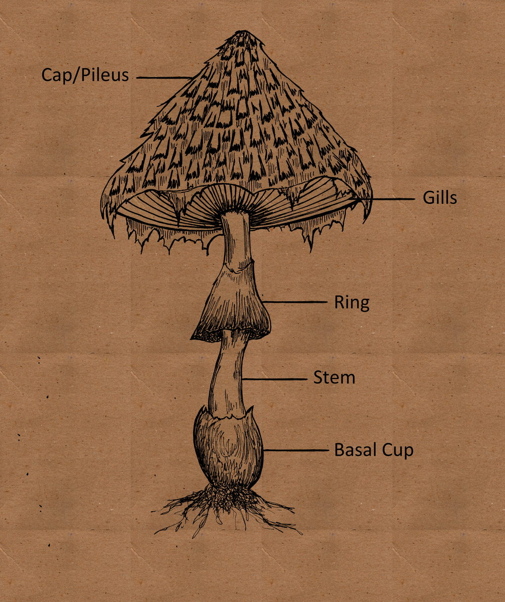 Mushroom Part labels text and brown craft background.jpg