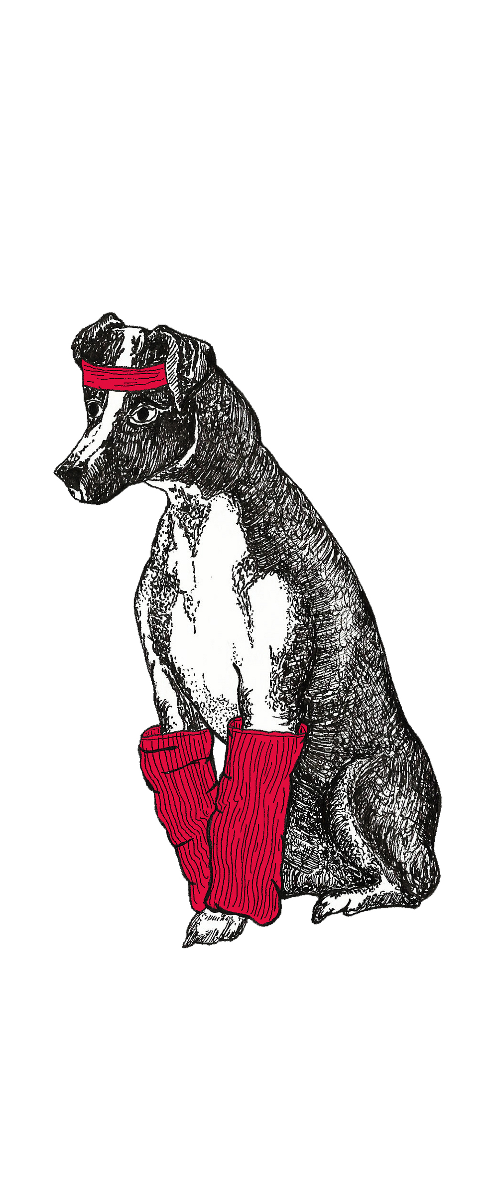 dog_leg_warmers_colour.jpg