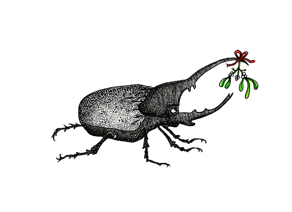atlas beetle.jpg