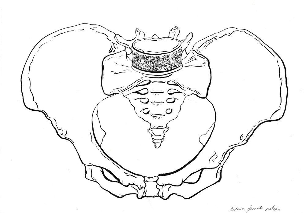 pelvis 2.jpg