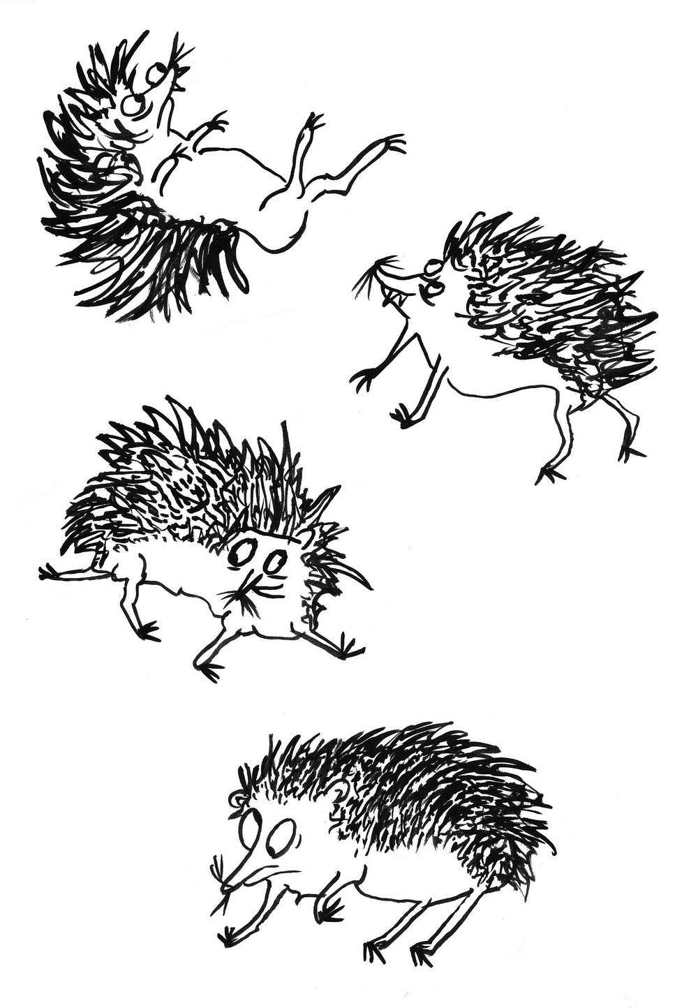 Hedgehog illo_clear background.jpg