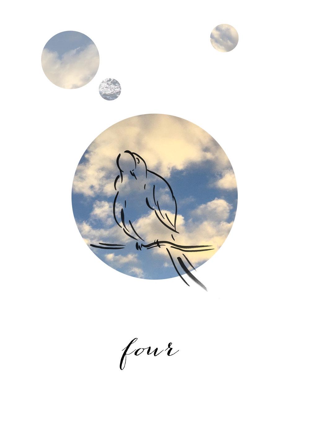 BIRD FOUR.jpg
