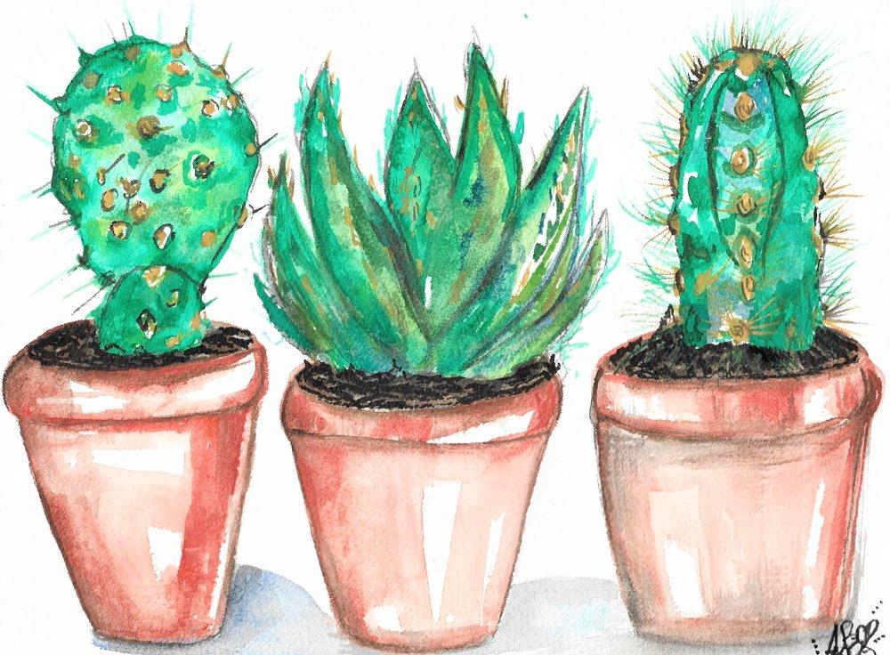 cacti (2).jpeg