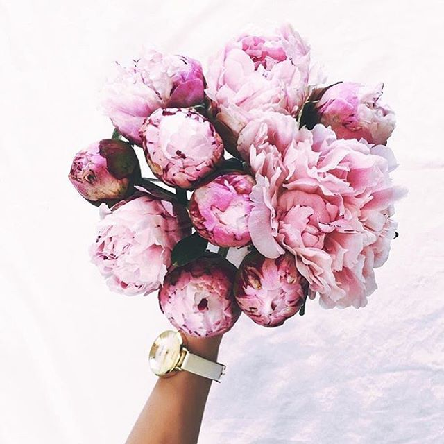 🌸 Spring is blooming 🌸 #newmonth #march #peonies #beautifulblooms #greatday #warmweather #enjoyit