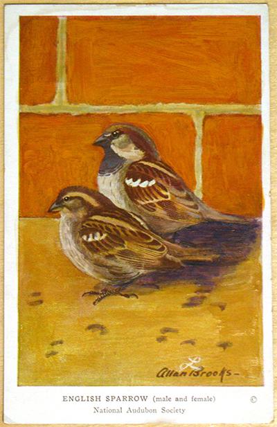 sparrow_after.jpg