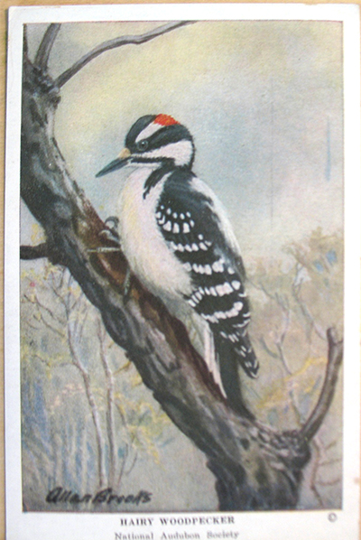 woodpecker_before.jpg
