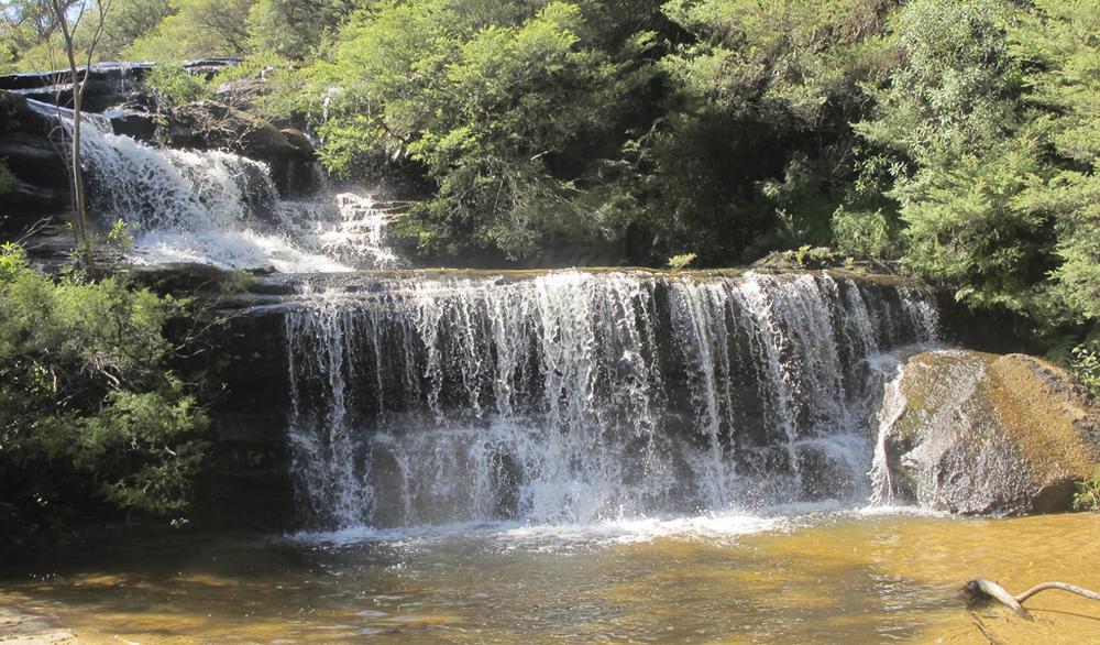 Charles Darwin Walk, Wentworth Falls