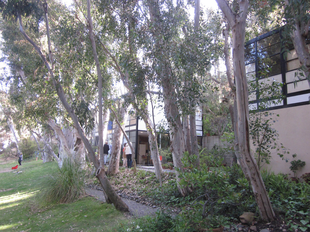 Stand of eucalypts alongside the house. Photo taken by Jaysun Dagger July 2013.