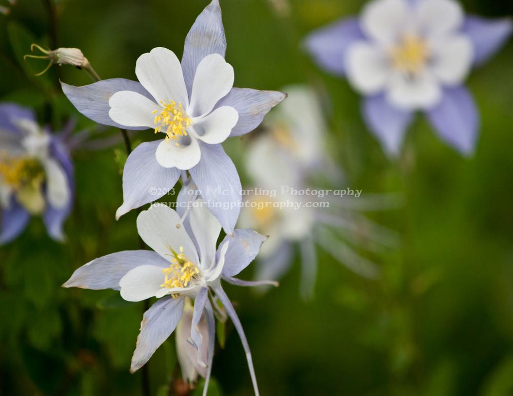 Flowers (7 of 12).jpg