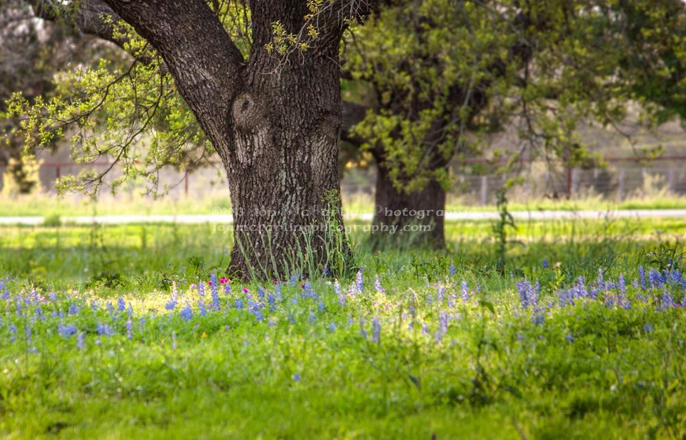 Flowers-0197.jpg