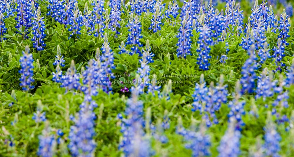 Flowers-0206.jpg