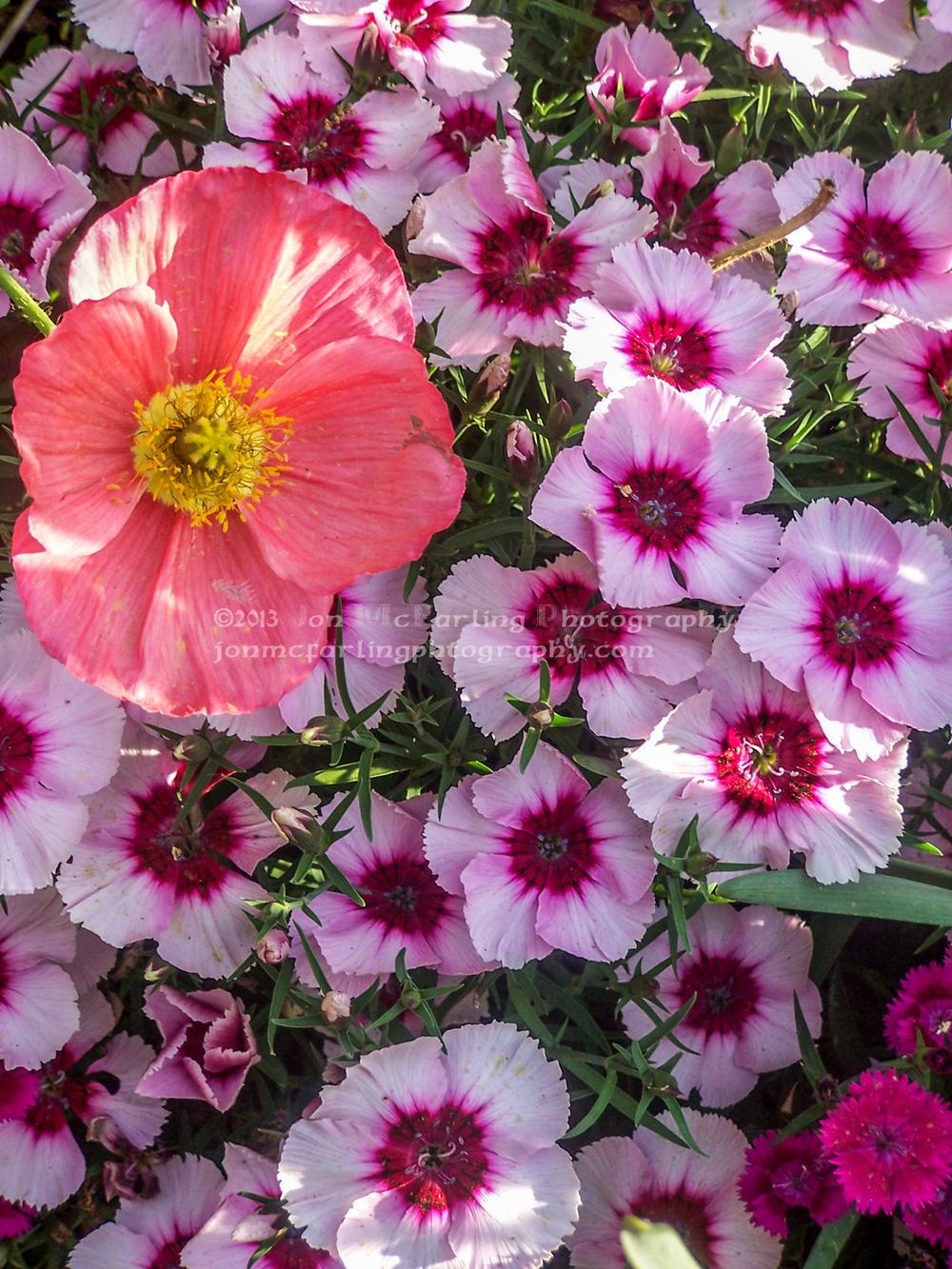 Flowers (1 of 12).jpg