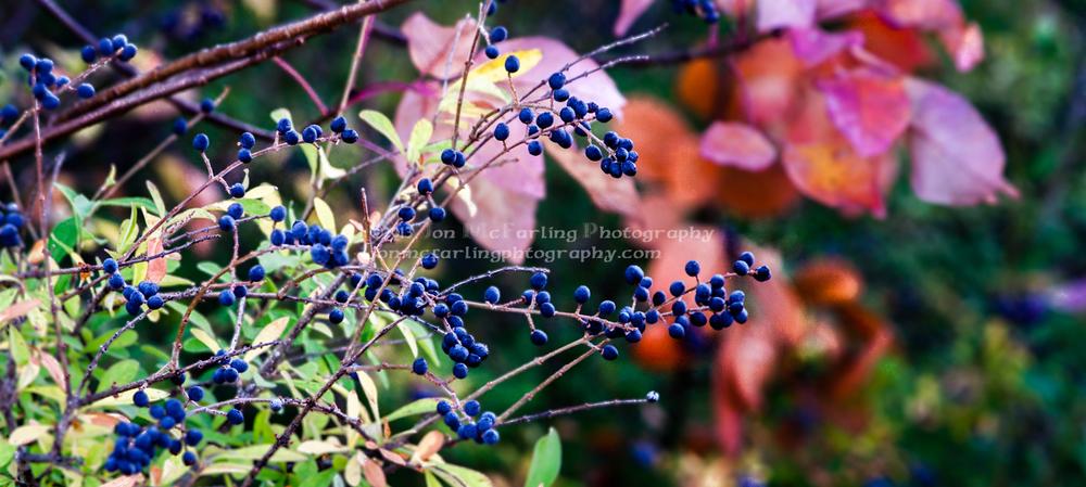 Flowers-6862.jpg